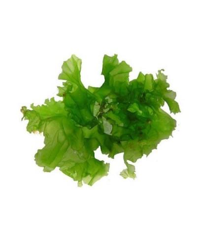 Alga lattuga di mare 250 gr sotto sale