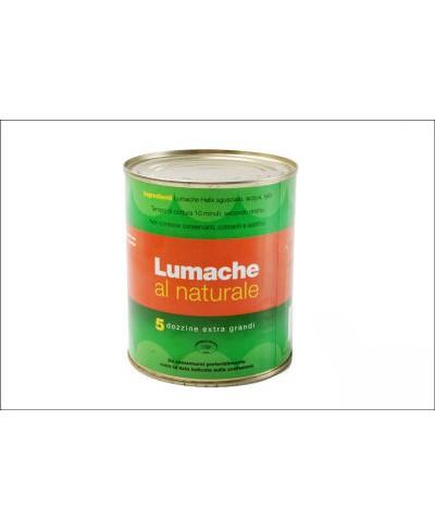 Lumache polpa al naturale 450 gr. netti - taglia grande